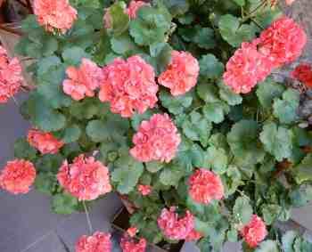 18.flowers