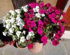 21.flowers