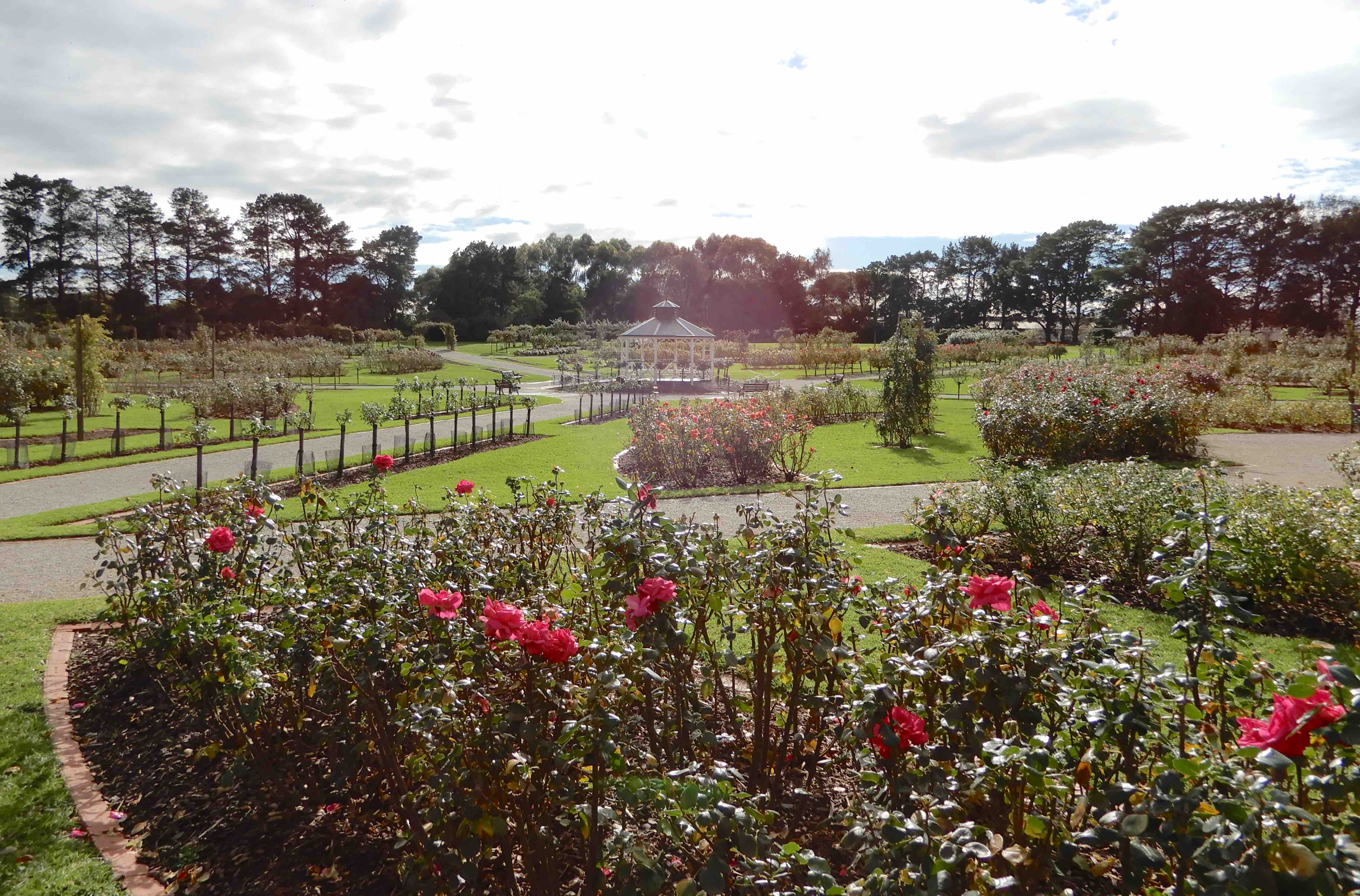 32.rose garden