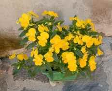 55.flowers