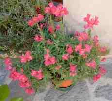 56.flowers