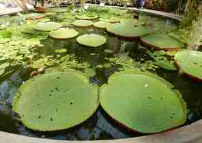 14.lily pads