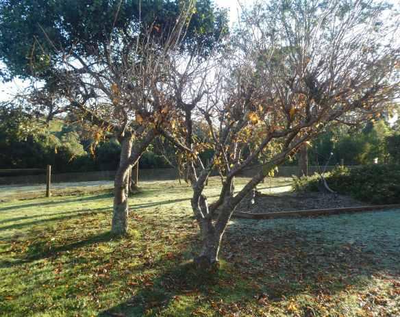 1.autumn trees