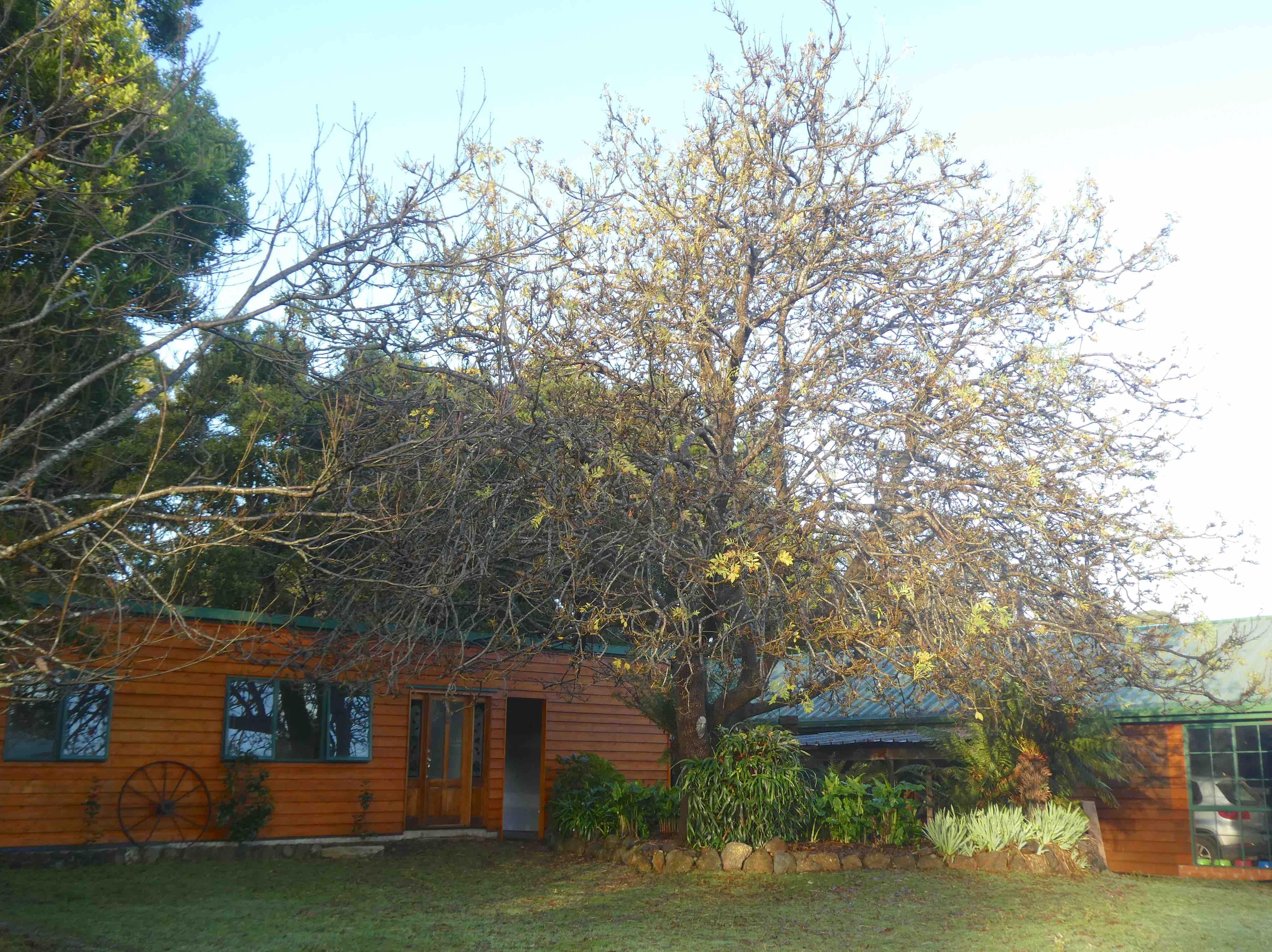 18.Ash tree