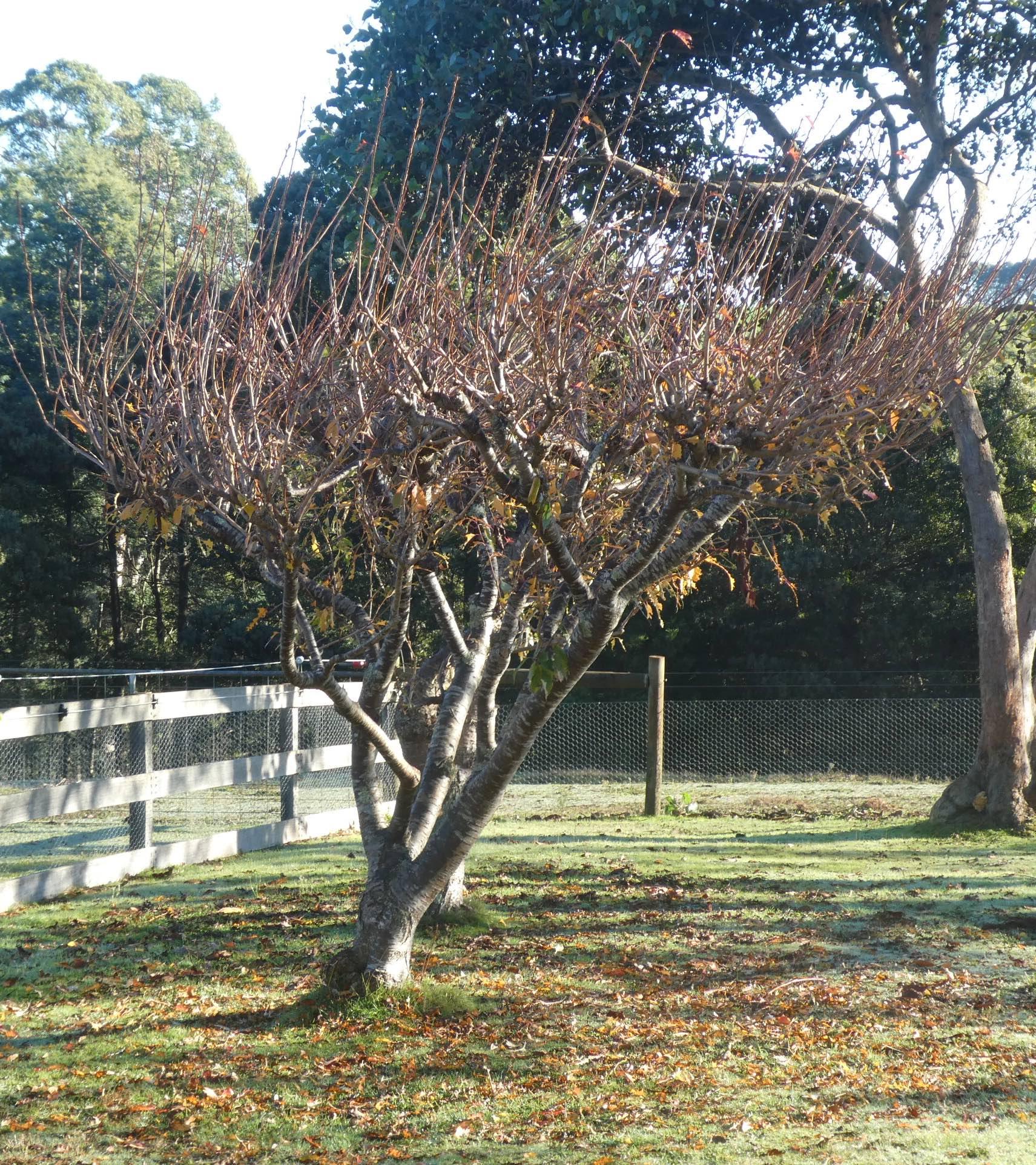 2.autumn trees