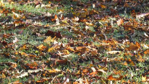 4.autumn leaves
